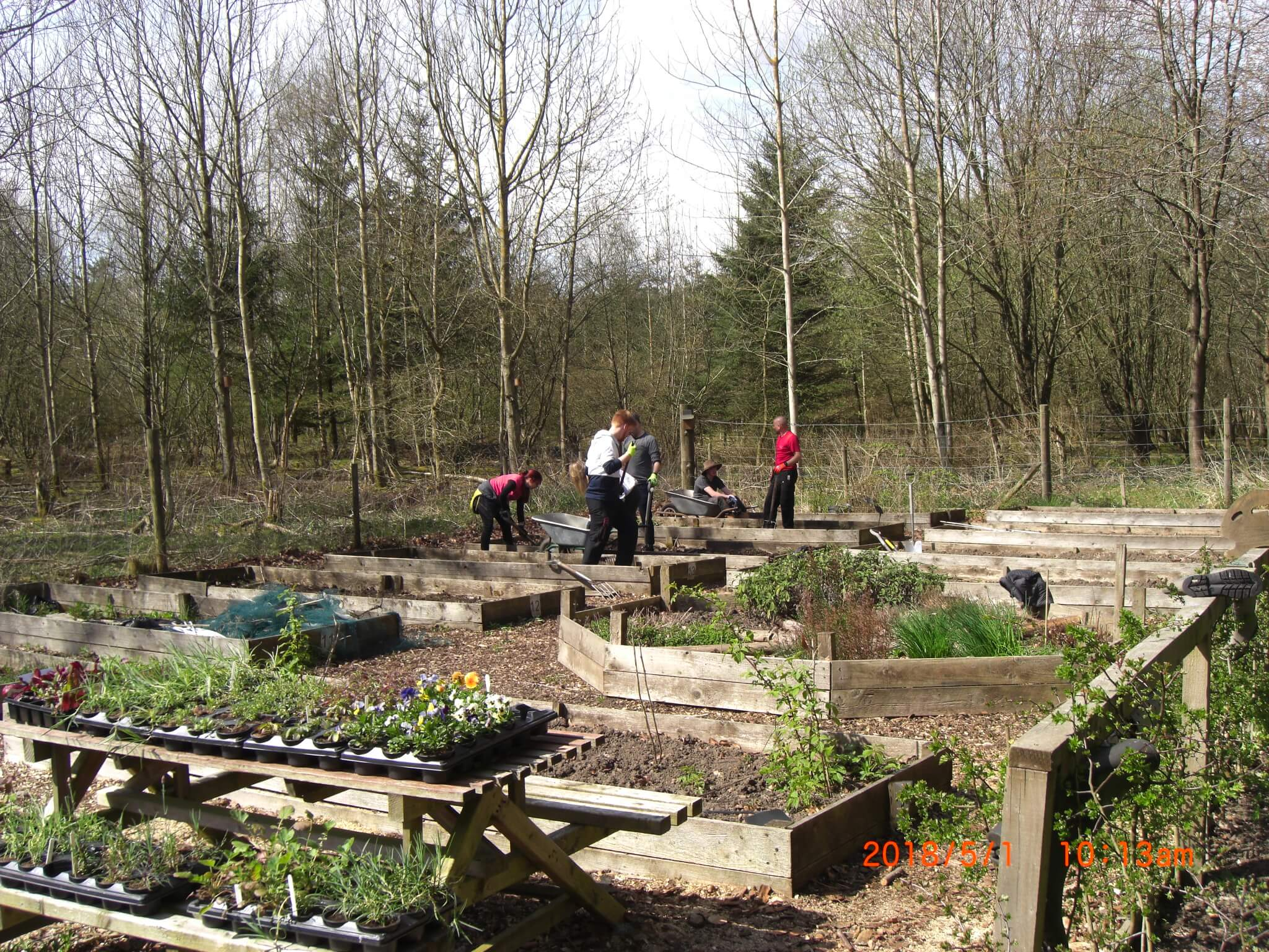 Outdoor Learning gardening