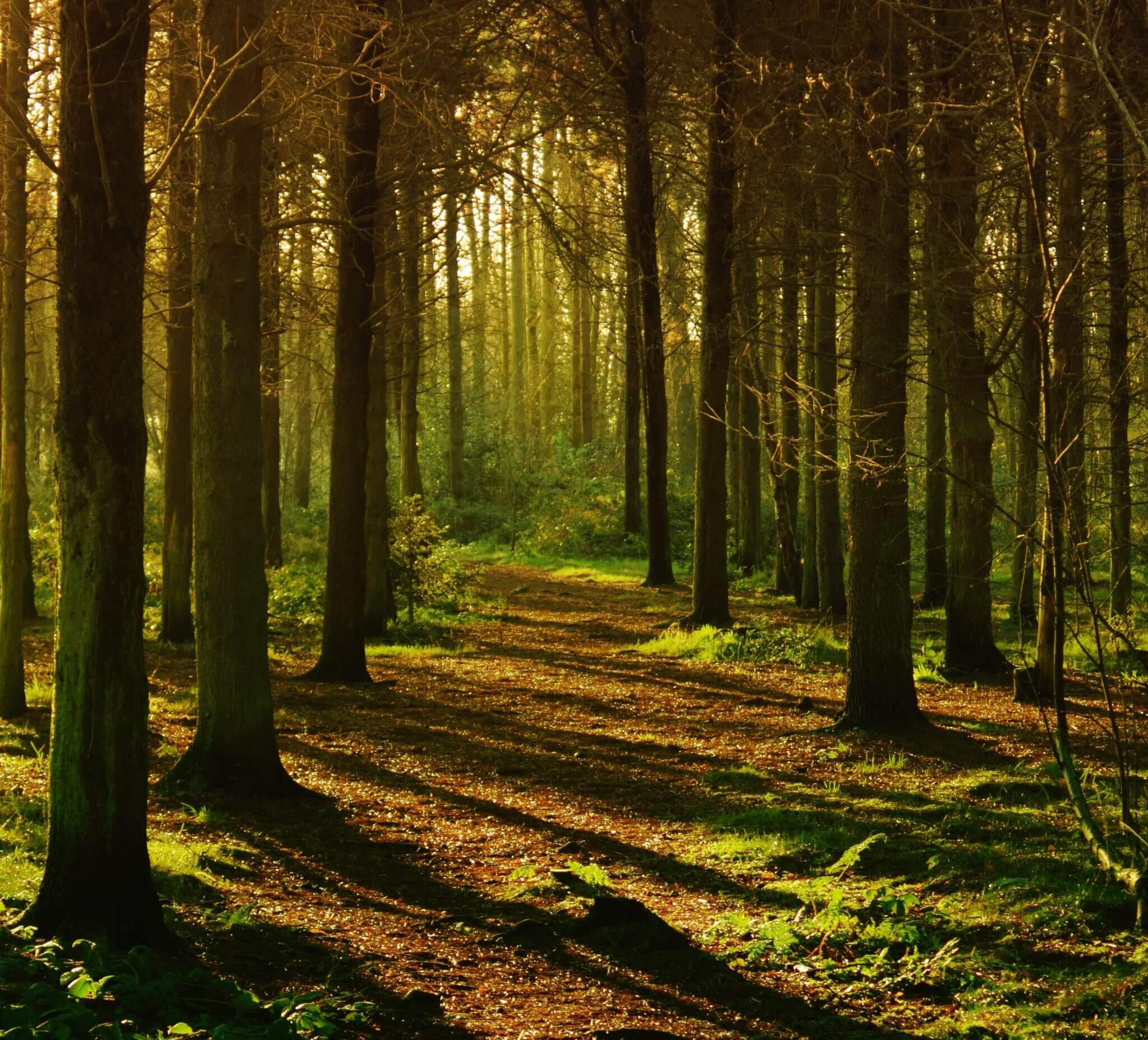 woodland path in sunlight